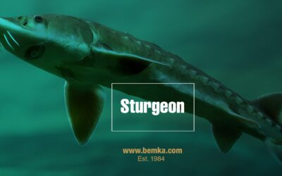 5 facts about Sturgeon Caviar you should know